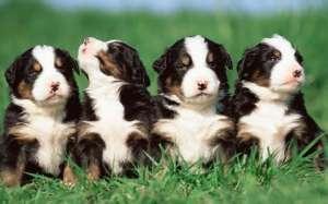 怎么去除狗狗身上的尿味